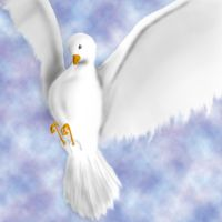 Dove by Than1Ducis