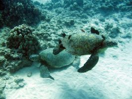 Sea Turtles by andres-rivera