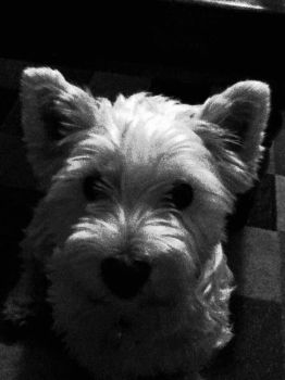 Sally the scottie terrior by sloaney1232