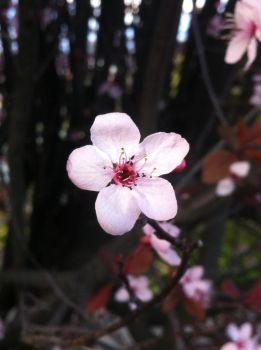 003 - Blossoms of Impending Spring by GoddessOfImmaturity