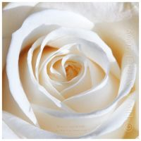 White Dream by Lilyas