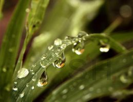 water drops by waashe