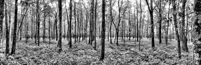 Lost in the Forest by IngoSchobert