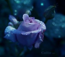 Hidden Within Light Reshaded by Callu