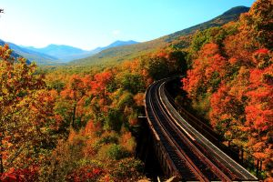 Stock: Railway through the Trees by Celem