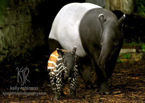 Mother and Child - Tapirs by Shadow-and-Flame-86