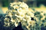 Flowers by SunMorning