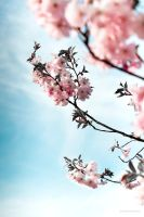 spring ii by ChristianRudat