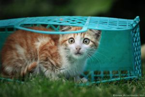 Surprised basket kitty by ZoranPhoto