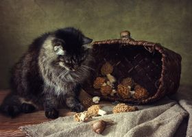 About cat, snails and morels by Daykiney
