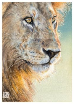 The Lion by CamillaMalcus
