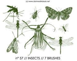 PHOTOSHOP BRUSHES : insects by darkmercy