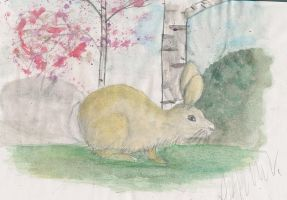 Easter rabbit Easter bunny by Zerkatres
