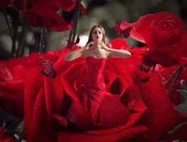 The girl in the rose by fcmon