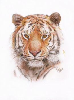 Watchful Tiger by siniart