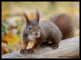 do you have something for me? by morho