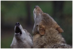 2010-159 Howling Together by W0LLE
