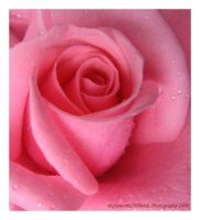Soft Pink by picworth1000wrds