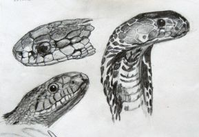 Snakes by Fiddlemoose