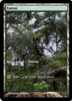 Magic Forest Cumberland Island Photo Card VIII by lizking10152011