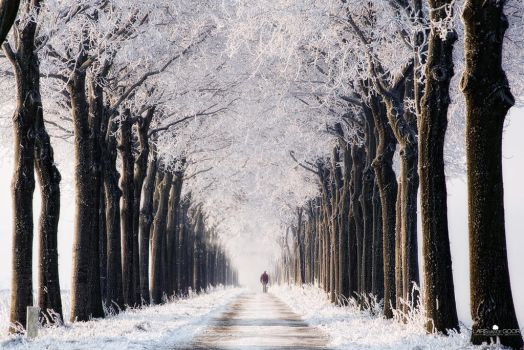 Endless Winter by LarsVanDeGoor