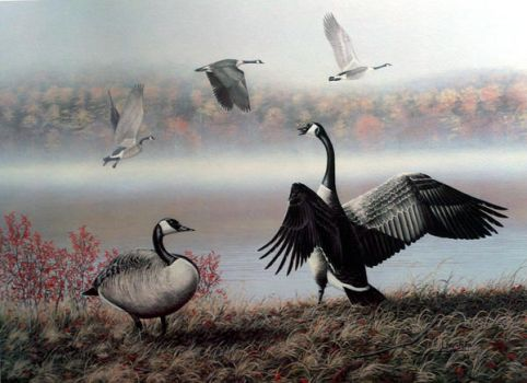 fall canada geese by traits