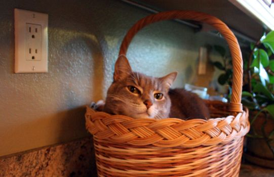 Puts the kitteh in the basket by Cynosura