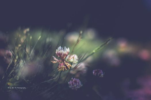 Clovers by Tb--Photography