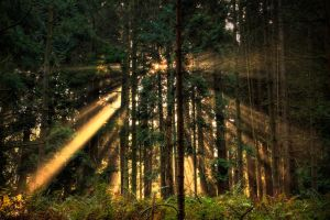 Sunny forest by chavez666