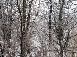 Forest of Ice by forestchild666