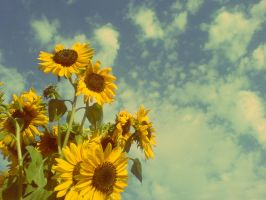 sunFLOWER on the sky by redmancoco