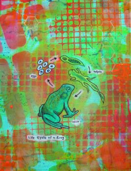 Life Cycle of a Frog by Rlkahwe4kl
