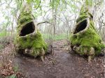 The fairy tree by magikstock