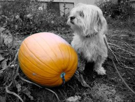 Einstein with Pumpkins by NemaLynn