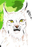 Lynx sketch by KhawlaAlAli