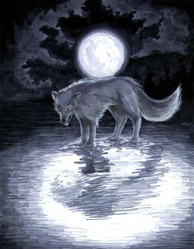Wolf by taintedsilence