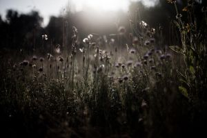 Flowers and Moonlight. by OloS