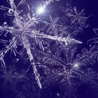 Snowflakes brushes by ReneeTr