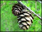 Old cone by Izabelka101