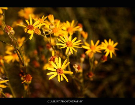 Sun colors by ClairutPhotography