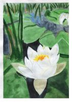 White water lily by 8Libelle8
