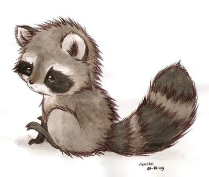 it's a raccoon by Liedeke