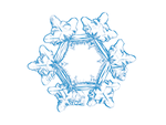 Snowflake Sunflower - pencil drawing by ChaoticMind75