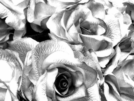 Fake Roses by ceilingfan026