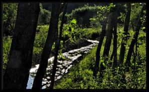 GreenBlack picture... by Yancis
