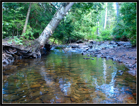 Serene Trout Stream by foreverlong926