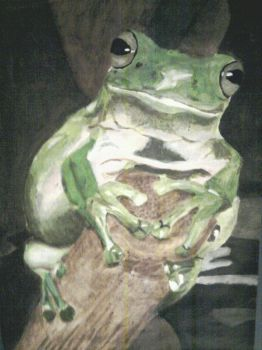 The frog by EvaWenborn