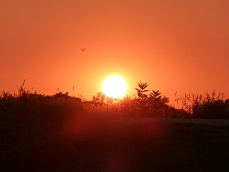 Scattered Rays Of The Setting Sun by The--Enchantress