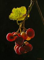 Grapes by georgeayers2000