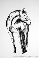 A Horseh by Ludifico